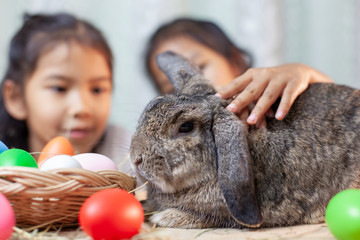 Happy asian child girls playing with cute Holland lop  rabbit with love and tenderness at easter festive