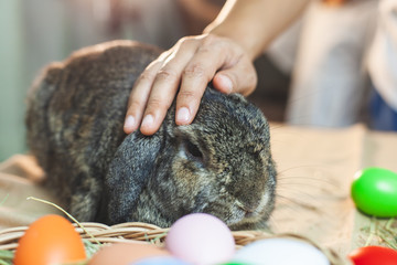 Woman touching and playing with cute Holland lop rabbit with love and tenderness at easter festive