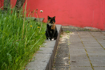 Outdoor Brown and Black City Cat Posing near Plants
