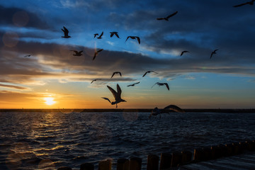 Vogel über Ostsee im Darlowko