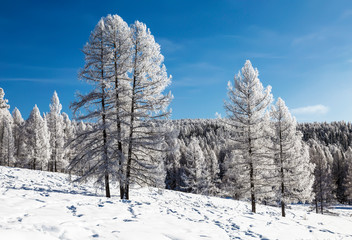 The Altai mountains on a sunny frosty winter day. Altai Republic, Western Siberia, Russia