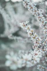 Blossom spring nature