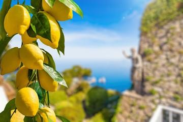 Bunches of fresh yellow ripe lemons, famous Faraglioni Rocks in blue sea, statue of Emperor Augustus on blurred background, Capri Island, Italy.