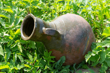 Ancient jug on the green grass