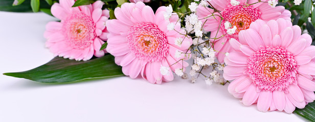 Fotorolgordijn Gerbera Bouquet of pink gerberas on a white background. Celebration of Women's Day and Mother's Day. Free space for text. Banner