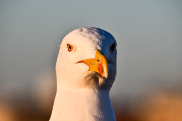 portrait of a duck, photo as background
