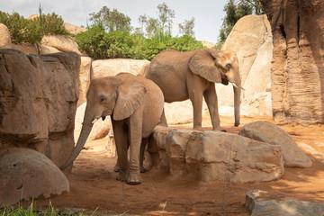 Thу picture of elephants in wildlife