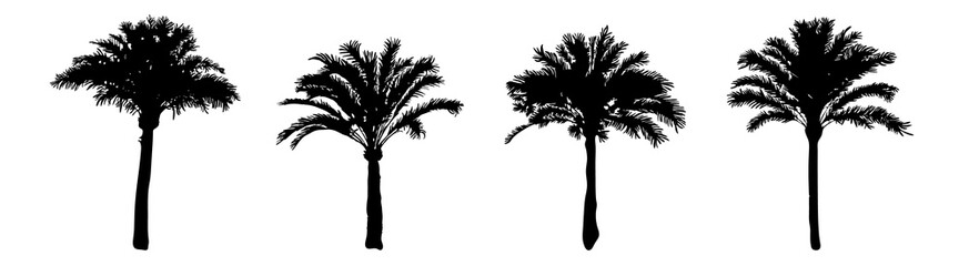 Set palm trees silhouette isolated on white background. Collection silhouettes of black realistic tropical palm trees with leaf. Coconut trees of different shapes flat icon. Stock vector illustration.