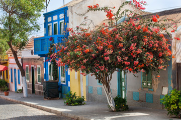 Street with colorful houses and red flowering tree in Cape Verde