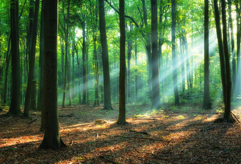 Beautiful sunrise in green forest