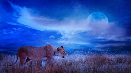 Wall Mural - Lion female in the African savannah. Moonlight night african landscape. Africa, Tanzania, Serengeti National Park. Wild life of Africa.