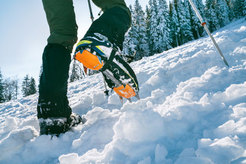 Close up shot of mountain boots with crampons and snow gaiters with snowy spruces on the background . High mountaineer pounding boots in hard snow ascending UP on the summit.
