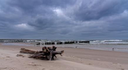 Stamm am Strand Ostsee Küste
