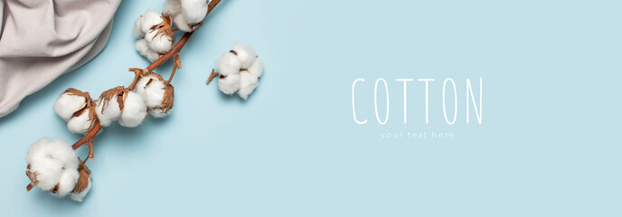 Flat lay Beautiful cotton branch and gray natural cotton fabric on blue background top view copy space. Delicate white cotton flowers. Light color cotton background. Eco textiles