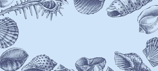 Hand-drawn seashells vector blue background. Decorative illustration with marine mollusks and place for text. Engraving drawing of marine fauna in retro style.