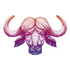 Buffalo, bull, ox. Hand drawn illustration for tattoo, emblem, badge, logo, patch, t-shirt