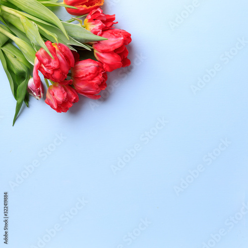 Spring season abstract background. Red tulips bouquet on blue surface. Mother's day, Women day, seasonal concept. Copy space.