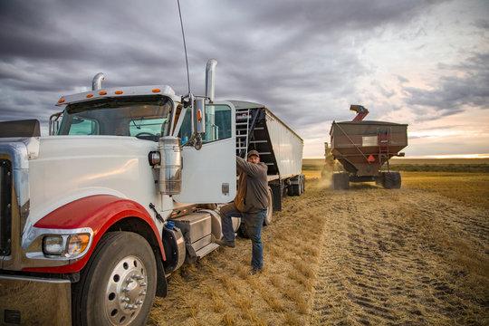 Male farmer climbing into semi trailer in rural field