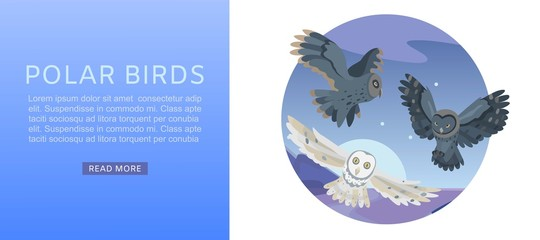 Aluminium Prints Owls cartoon Owls, night sky with flying bird and moon over landmark vector illustration web banner. Wildlife birds owls ornitology web site or banner. Polar owl and night person website.