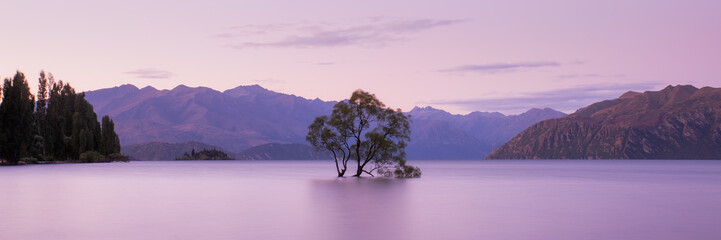 Zelfklevend Fotobehang Lichtroze That Wanaka Tree at Sunset, Lake Wanaka New Zealand, Popular Travel Destination South Island, NZ
