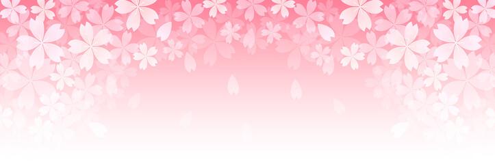 Fototapeta 桜 春 花 背景 obraz