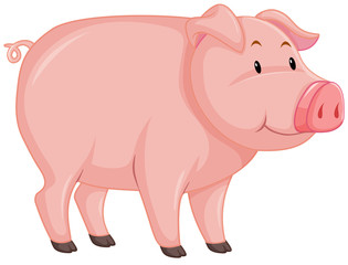 Cute pig with pink skin on white background