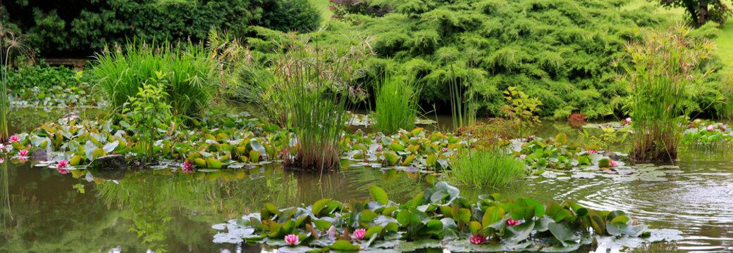 Großer Gartenteich mit Seerosen und Grünbepflanzung, Panorama