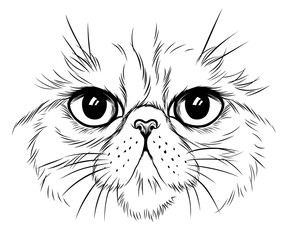 Exotic cat face illustration