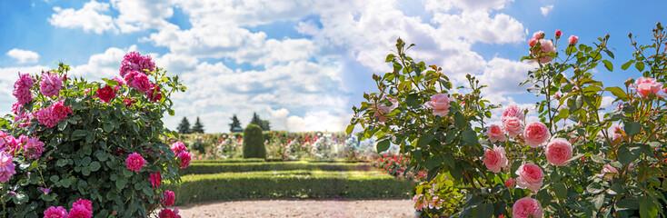 Printed kitchen splashbacks Garden Roses garden in sunny summer day.