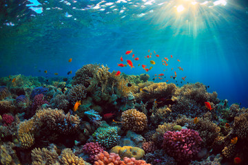 Tuinposter Koraalriffen coral reef with fish underwater sea