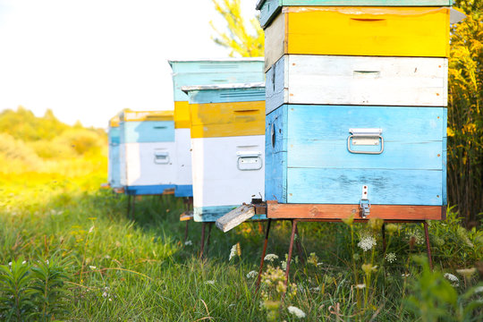 Beehive outdoors. Natural honey making. Eco-friendly food.