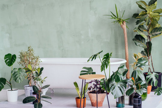 Stylish interior of bathroom with green houseplants