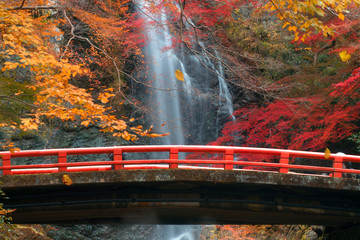 Wall Mural - the red bridge in minoh waterfall