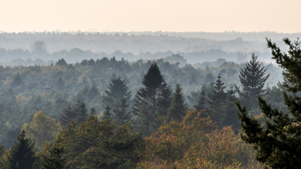 Autumn forest panorama landscape at dusk - Hondsrug, Netherlands.