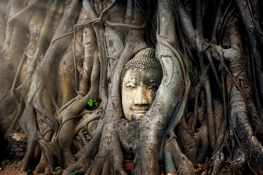 Buddha head in tree ayutthaya Thailand travel concept.Wat Mahathat temple is favorite place of Ayutthaya and world heritage.The buddha face is amazing.