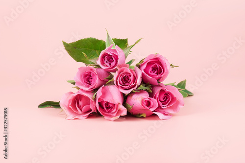 Pink Rose flower on pink background with copy space for text. Love, International Women day, Mother day and Happy Valentine day concept
