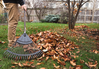 Cropped image of boy raking leaves in a backyard on a fall day.