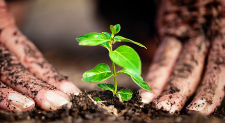 Close up woman hand planting young tree