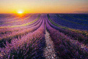 Tuinposter Lavendel Blooming lavender field at sunset in Provence, France