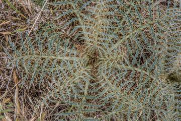 Obraz Pflanze wie Spinnennetz - fototapety do salonu