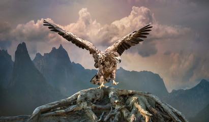 Stores photo Aigle eagle with wings outstretched in the mountains