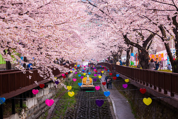 Wall Mural - Jinhae Gunhangje Festival in spring is the popular cherry blossom viewing spot at jinhae, South Korea.