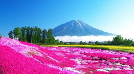 Foto op Plexiglas Roze 蝦夷富士と絶景の芝桜
