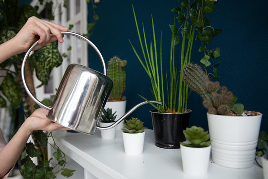 Hands holding a metal watering can and watering indoor plants