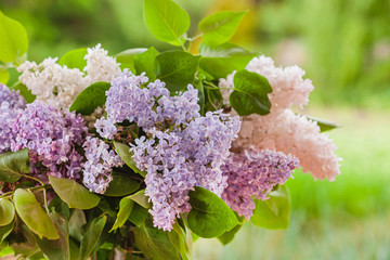 Deurstickers Lilac lilac flowers in the vase