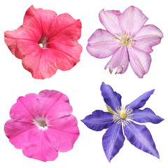 Fototapete - Set of clematis and petunia isolated on a white background