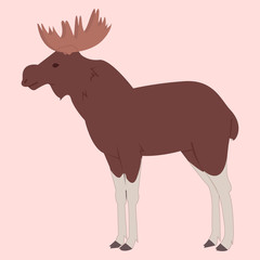 Vector picture of moose on pink background