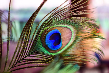 Fotorolgordijn Pauw beautiful close up peacock feather