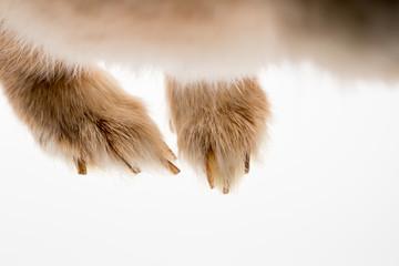 可愛いミニウサギの足のアップ写真