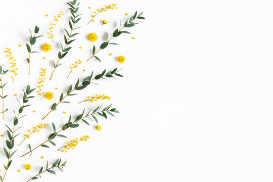 Flowers composition. Yellow flowers, eucalyptus branches on white background. Spring concept. Flat lay, top view